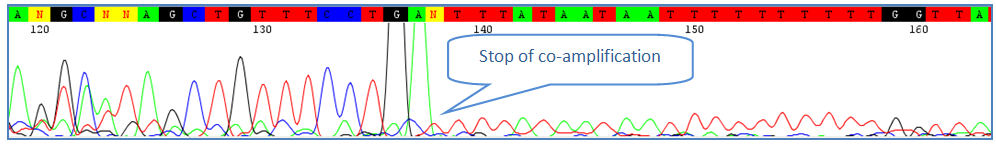 coamplification of contaminants