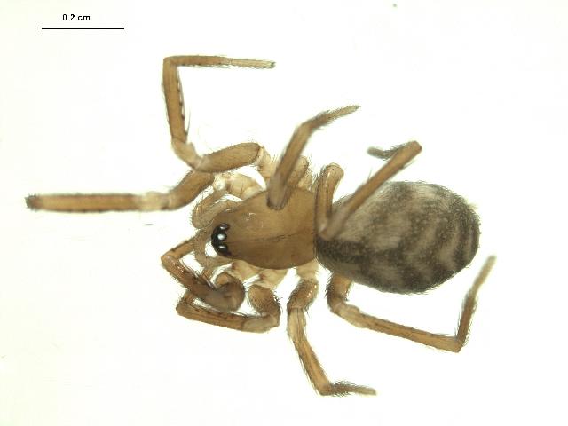 spider specimen in ethanol