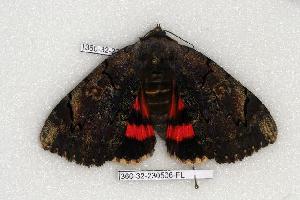 ( - 360-32-230506-FL)  @13 [ ] Copyright (2008) Robert J. Borth Research Collection of Robert J. Borth