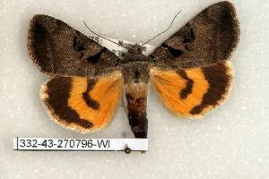 (Catocala whitneyi - 332-43-270796-WI)  @14 [ ] Copyright (2008) Robert J. Borth Research Collection of Robert J. Borth