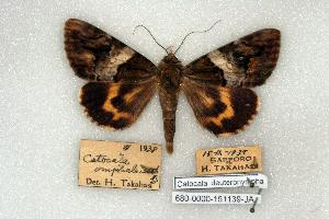 (Catocala dueteronympha - 680-0000-151139-JA)  @14 [ ] Copyright (2008) Robert J. Borth Research Collection of Robert J. Borth