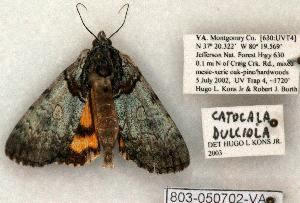 (Catocala dulciola - 803-050702-VA)  @15 [ ] Copyright (2008) Robert J. Borth Research Collection of Robert J. Borth