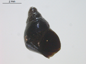 (Archaeogastropoda - 11BIOAK-0521)  @13 [ ] Unspecified (default): All Rights Reserved  Unspecified Centre for Biodiversity Genomics