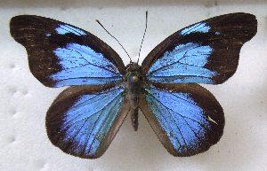 (Poritiinae - MLIB-1420)  @15 [ ] CreativeCommons - Attribution Non-Commercial Share-Alike (2014) Michel Libert Centre for Biodiversity Genomics