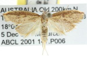 ( - CCDB-15755-A06)  @12 [ ] CreativeCommons - Attribution Non-Commercial Share-Alike (2011) CSIRO/BIO Photography Group Centre for Biodiversity Genomics