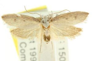 (Eochrois sp. ANIC19 - CCDB-15755-F03)  @11 [ ] CreativeCommons - Attribution Non-Commercial Share-Alike (2011) CSIRO/BIO Photography Group Centre for Biodiversity Genomics