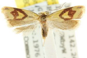 (Plectobela personata - CCDB-15756-D11)  @12 [ ] CreativeCommons - Attribution Non-Commercial Share-Alike (2011) CSIRO/BIO Photography Group Centre for Biodiversity Genomics