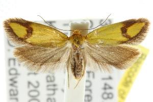 (Plectobela - CCDB-15756-D12)  @14 [ ] CreativeCommons - Attribution Non-Commercial Share-Alike (2011) CSIRO/BIO Photography Group Centre for Biodiversity Genomics