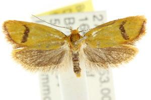 (Plectobela sp. ANIC1 - CCDB-15756-E06)  @11 [ ] CreativeCommons - Attribution Non-Commercial Share-Alike (2011) CSIRO/BIO Photography Group Centre for Biodiversity Genomics