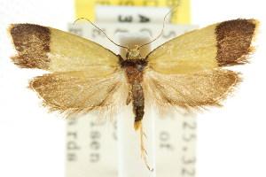 (Heteroteucha porphyryplaca - CCDB-15757-C05)  @11 [ ] CreativeCommons - Attribution Non-Commercial Share-Alike (2011) CSIRO/BIO Photography Group Centre for Biodiversity Genomics