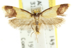 (Rhadinoloba tyrianthina - CCDB-15757-D10)  @11 [ ] CreativeCommons - Attribution Non-Commercial Share-Alike (2011) CSIRO/BIO Photography Group Centre for Biodiversity Genomics