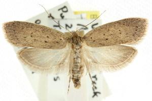 (Stictochila sp. ANIC3 - CCDB-15758-C02)  @13 [ ] CreativeCommons - Attribution Non-Commercial Share-Alike (2011) CSIRO/BIO Photography Group Centre for Biodiversity Genomics