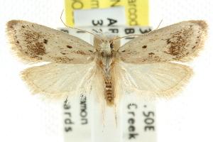 (Stictochila sp. ANIC4 - CCDB-15758-C03)  @11 [ ] CreativeCommons - Attribution Non-Commercial Share-Alike (2011) CSIRO/BIO Photography Group Centre for Biodiversity Genomics