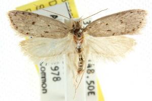 (Stictochila sp. ANIC5 - CCDB-15758-C05)  @11 [ ] CreativeCommons - Attribution Non-Commercial Share-Alike (2011) CSIRO/BIO Photography Group Centre for Biodiversity Genomics