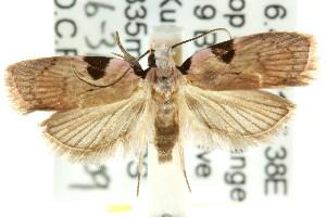 ( - CCDB-15758-E02)  @13 [ ] CreativeCommons - Attribution Non-Commercial Share-Alike (2011) CSIRO/BIO Photography Group Centre for Biodiversity Genomics