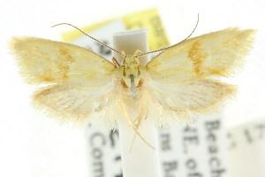 (Baiocystis coniortia - CCDB-15761-E04)  @11 [ ] CreativeCommons - Attribution Non-Commercial Share-Alike (2011) CSIRO/BIO Photography Group Centre for Biodiversity Genomics