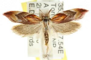 (Deigmoesta sp. ANIC2 - CCDB-15762-A07)  @11 [ ] CreativeCommons - Attribution Non-Commercial Share-Alike (2011) CSIRO/BIO Photography Group Centre for Biodiversity Genomics