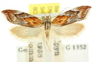 (Deigmoesta sp. ANIC4 - CCDB-15762-B01)  @11 [ ] CreativeCommons - Attribution Non-Commercial Share-Alike (2011) CSIRO/BIO Photography Group Centre for Biodiversity Genomics