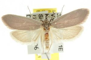 (Wingia theophila - CCDB-15762-F09)  @15 [ ] CreativeCommons - Attribution Non-Commercial Share-Alike (2011) CSIRO/BIO Photography Group Centre for Biodiversity Genomics