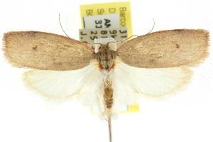 (Euchaetis rhodochila - CCDB-15763-D08)  @15 [ ] CreativeCommons - Attribution Non-Commercial Share-Alike (2011) CSIRO/BIO Photography Group Centre for Biodiversity Genomics