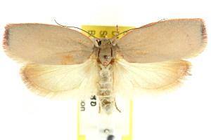 (Euchaetis iozona - CCDB-15763-F11)  @15 [ ] CreativeCommons - Attribution Non-Commercial Share-Alike (2011) CSIRO/BIO Photography Group Centre for Biodiversity Genomics