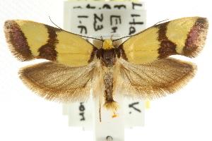 ( - CCDB-15766-F08)  @15 [ ] CreativeCommons - Attribution Non-Commercial Share-Alike (2011) CSIRO/BIO Photography Group Centre for Biodiversity Genomics