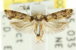 (Bathrosterra sp. ANIC1 - CCDB-15768-C05)  @11 [ ] CreativeCommons - Attribution Non-Commercial Share-Alike (2011) CSIRO/BIO Photography Group Centre for Biodiversity Genomics