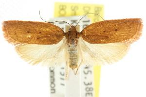 (Enoplidia sp. ANIC1 - CCDB-15768-E08)  @14 [ ] CreativeCommons - Attribution Non-Commercial Share-Alike (2011) CSIRO/BIO Photography Group Centre for Biodiversity Genomics
