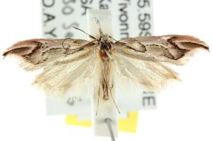 (Zelotechna falcifera - CCDB-15776-B05)  @11 [ ] CreativeCommons - Attribution Non-Commercial Share-Alike (2011) CSIRO/BIO Photography Group Centre for Biodiversity Genomics