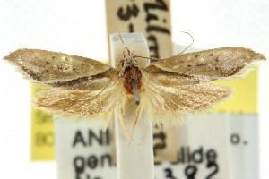 (Zelotechna hirax - CCDB-15776-B12)  @11 [ ] CreativeCommons - Attribution Non-Commercial Share-Alike (2011) CSIRO/BIO Photography Group Centre for Biodiversity Genomics