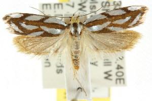 ( - CCDB-15776-F02)  @11 [ ] CreativeCommons - Attribution Non-Commercial Share-Alike (2011) CSIRO/BIO Photography Group Centre for Biodiversity Genomics