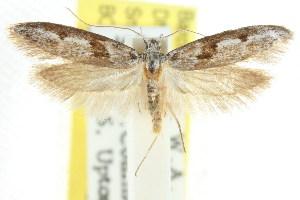 (Atholosticta - CCDB-15780-E09)  @15 [ ] CreativeCommons - Attribution Non-Commercial Share-Alike (2011) CSIRO/BIO Photography Group Centre for Biodiversity Genomics