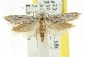 ( - CCDB-15784-H07)  @13 [ ] CreativeCommons - Attribution Non-Commercial Share-Alike (2011) CSIRO/BIO Photography Group Centre for Biodiversity Genomics