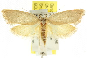 (Chezala - CCDB-15785-E04)  @15 [ ] CreativeCommons - Attribution Non-Commercial Share-Alike (2011) CSIRO/BIO Photography Group Centre for Biodiversity Genomics