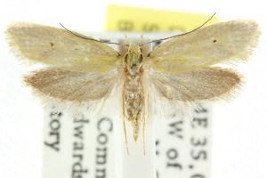 (Cnecophora cinetica - CCDB-15786-D02)  @13 [ ] CreativeCommons - Attribution Non-Commercial Share-Alike (2011) CSIRO/BIO Photography Group Centre for Biodiversity Genomics