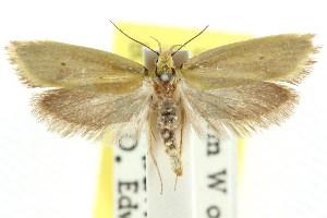 (Cnecophora sp. ANIC1 - CCDB-15786-D03)  @11 [ ] CreativeCommons - Attribution Non-Commercial Share-Alike (2011) CSIRO/BIO Photography Group Centre for Biodiversity Genomics