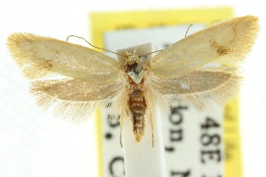 (Olbonoma sp. ANIC3 - CCDB-15789-B05)  @13 [ ] CreativeCommons - Attribution Non-Commercial Share-Alike (2011) CSIRO/BIO Photography Group Centre for Biodiversity Genomics