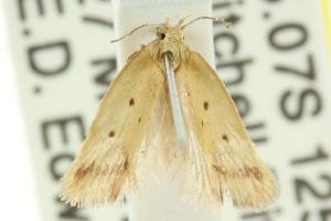 (Olbonoma sp. ANIC7 - CCDB-15789-C03)  @12 [ ] CreativeCommons - Attribution Non-Commercial Share-Alike (2011) CSIRO/BIO Photography Group Centre for Biodiversity Genomics