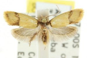 (Olbonoma sp. ANIC8 - CCDB-15789-C09)  @13 [ ] CreativeCommons - Attribution Non-Commercial Share-Alike (2011) CSIRO/BIO Photography Group Centre for Biodiversity Genomics