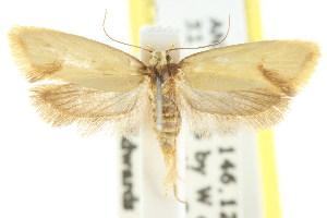 (Olbonoma plagiomochla - CCDB-15789-E11)  @14 [ ] CreativeCommons - Attribution Non-Commercial Share-Alike (2011) CSIRO/BIO Photography Group Centre for Biodiversity Genomics