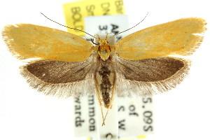 ( - CCDB-15792-H11)  @14 [ ] CreativeCommons - Attribution Non-Commercial Share-Alike (2011) CSIRO/BIO Photography Group Centre for Biodiversity Genomics