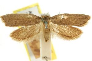 (Pachybela parisa - CCDB-15819-C04)  @11 [ ] CreativeCommons - Attribution Non-Commercial Share-Alike (2011) CSIRO/BIO Photography Group Centre for Biodiversity Genomics