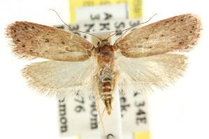 (Eulechria eriphila - CCDB-15821-D03)  @14 [ ] CreativeCommons - Attribution Non-Commercial Share-Alike (2011) CSIRO/BIO Photography Group Centre for Biodiversity Genomics