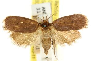 (Eulechria eremnopa - CCDB-15821-D12)  @11 [ ] CreativeCommons - Attribution Non-Commercial Share-Alike (2011) CSIRO/BIO Photography Group Centre for Biodiversity Genomics