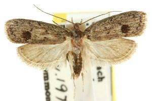 (Eulechria balanota - CCDB-15821-F02)  @13 [ ] CreativeCommons - Attribution Non-Commercial Share-Alike (2011) CSIRO/BIO Photography Group Centre for Biodiversity Genomics