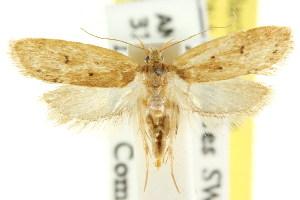 (Eulechria homotona - CCDB-15821-F05)  @13 [ ] CreativeCommons - Attribution Non-Commercial Share-Alike (2011) CSIRO/BIO Photography Group Centre for Biodiversity Genomics