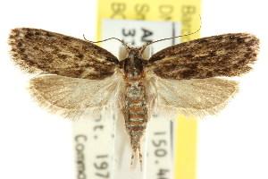 (Eulechria arctans - CCDB-15821-F10)  @14 [ ] CreativeCommons - Attribution Non-Commercial Share-Alike (2011) CSIRO/BIO Photography Group Centre for Biodiversity Genomics