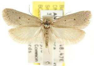 (Eulechria leptobela - CCDB-15821-G06)  @14 [ ] CreativeCommons - Attribution Non-Commercial Share-Alike (2011) CSIRO/BIO Photography Group Centre for Biodiversity Genomics