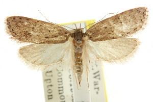 (Eulechria pastea - CCDB-15821-G08)  @13 [ ] CreativeCommons - Attribution Non-Commercial Share-Alike (2011) CSIRO/BIO Photography Group Centre for Biodiversity Genomics