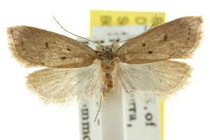 (Eulechria orestera - CCDB-15821-G10)  @14 [ ] CreativeCommons - Attribution Non-Commercial Share-Alike (2011) CSIRO/BIO Photography Group Centre for Biodiversity Genomics